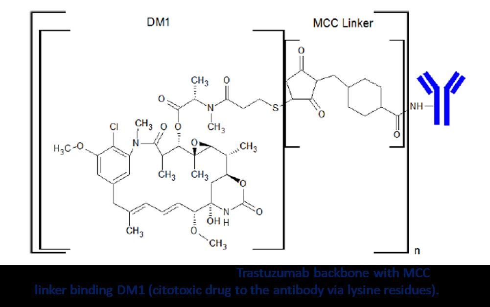 Drug antibody ratio